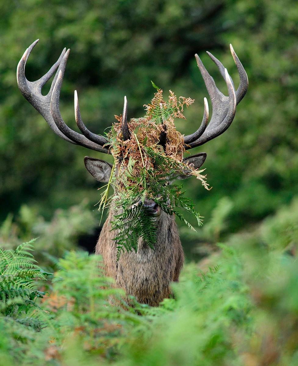 Dit Zijn De Winnaars Van De Comedy Wildlife Photography Awards