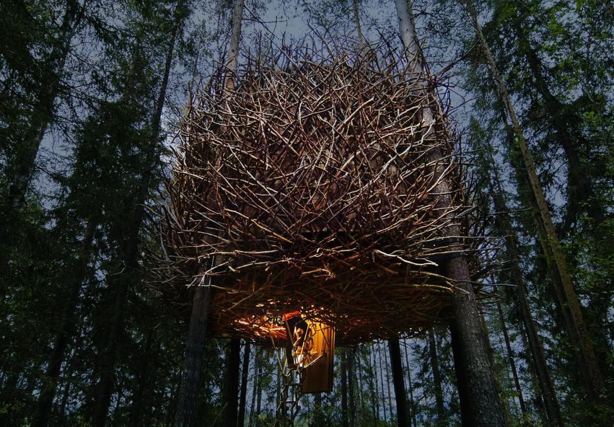 -nest-6