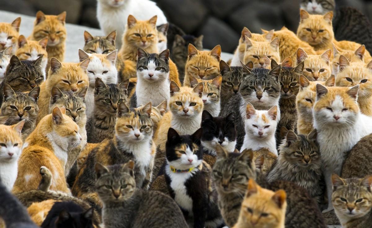 cat island japan activiteiten