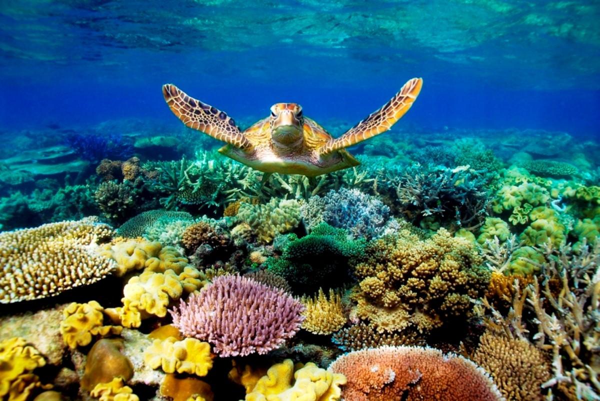 man man great barrier reef bestemmingen