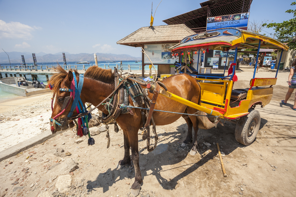 """Gili Trawangan, Indonesia - September 14, 2012: Horse and cart wait by the main pier at Gili Trawangan island in Indonesia. People can be seen in the background. The island doesn't allow motorised cars or scooters."""