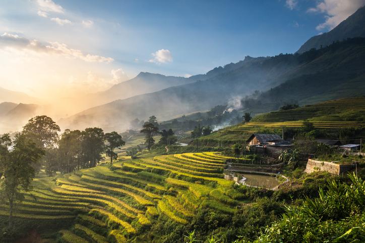 Rice fields on terraced in sunset at SAPA, Lao Cai, Vietnam. Rice fields prepare the harvest at Northwest Vietnam