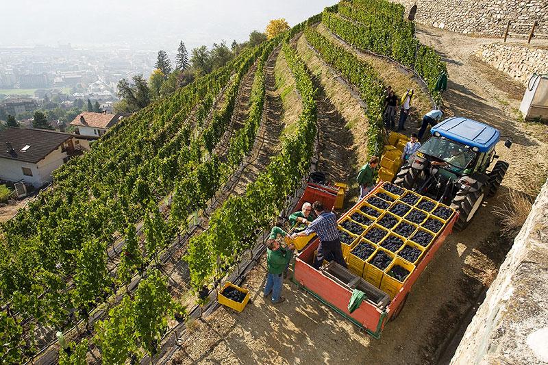 valle daoste wijnen italie