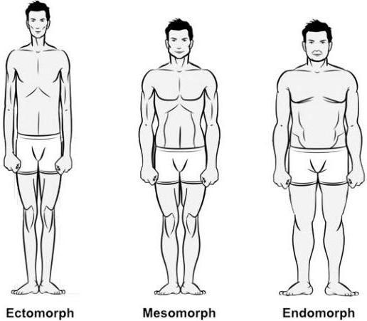 Fitness naar lichaamsbouw MAN MAN