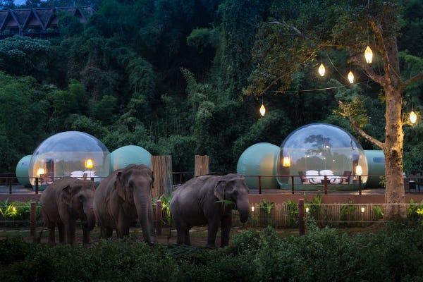 Slapen tussen olifanten
