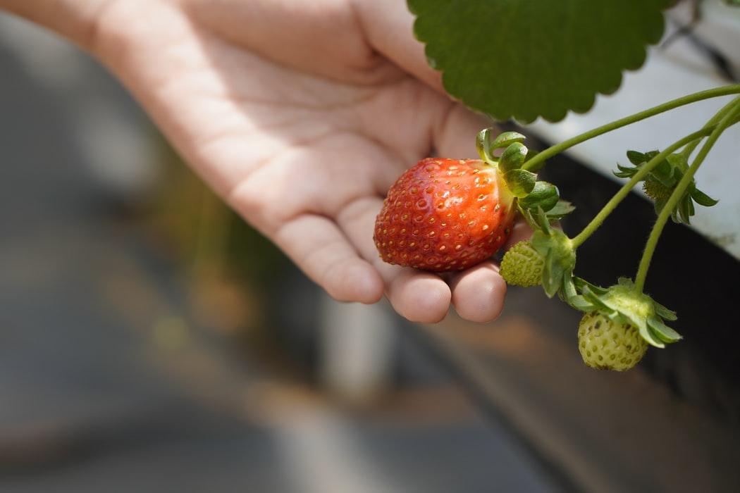 lekker fruit als gezonde snack