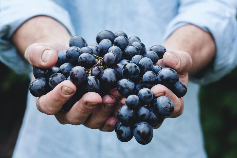 zelf wijn maken druiven