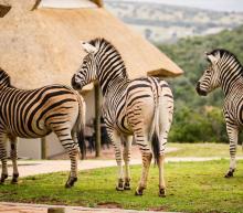 De ultieme reisroute door Zuid-Afrika, deel 2