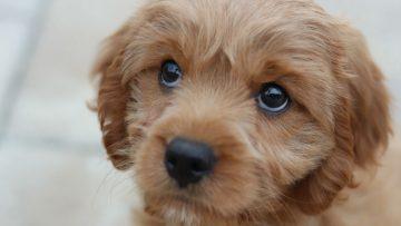 Man moet van vriendin kiezen: zij of de hond eruit. Zijn reactie is geweldig.