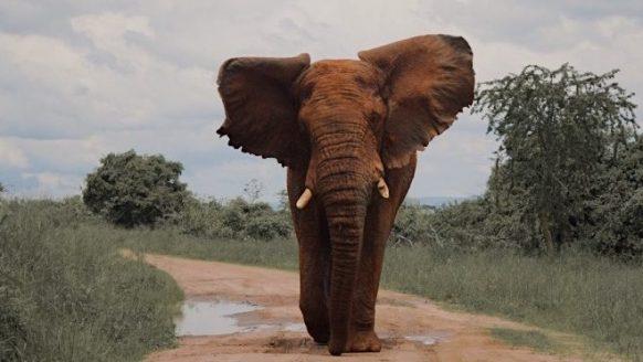 Rondreis Rwanda: de perfecte route voor de avonturier en natuurliefhebber