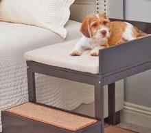 Dankzij dit mini-bed met trap kan jij iedere nacht naast jouw viervoeter slapen
