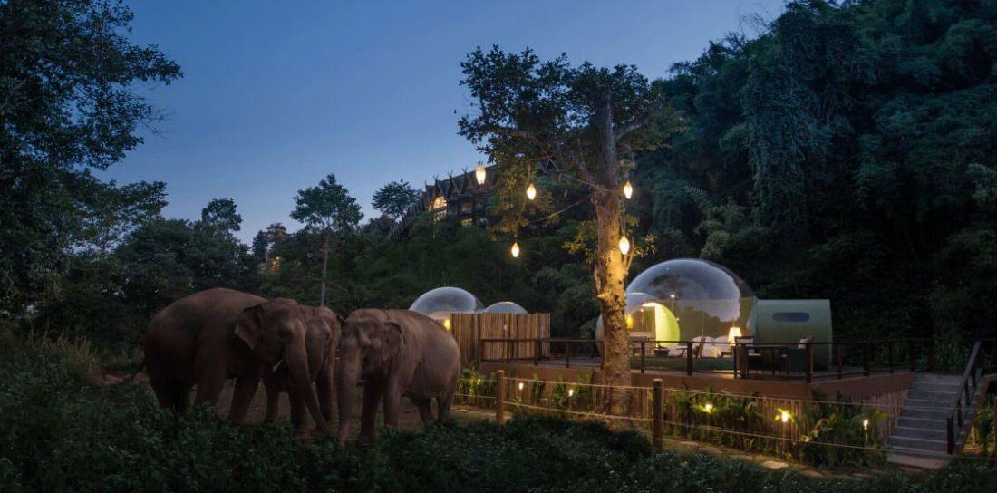 Jij kan nu in Thailand tussen de olifanten slapen in een luxe Jungle Bubbel