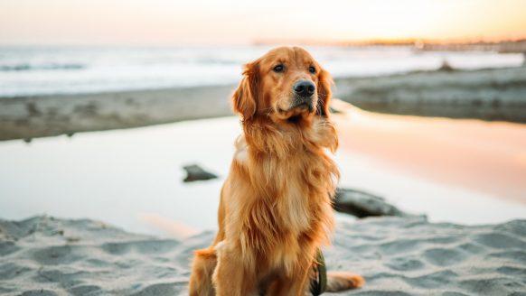 Hoeveel geld kost een hond per jaar?