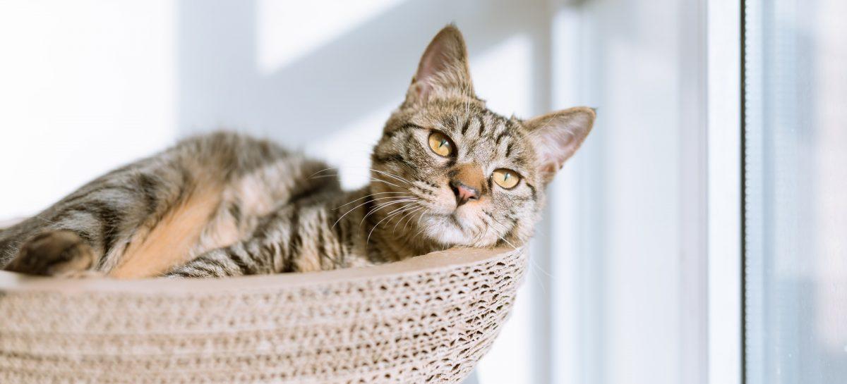 Dit zijn de top 10 populairste kattennamen in Nederland