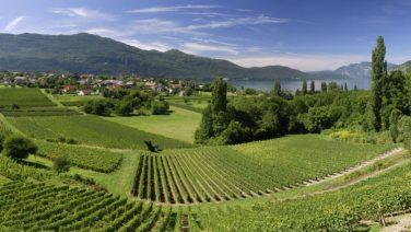 Dit zijn de mooiste wijnroutes door Frankrijk