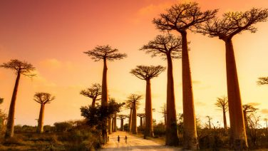 Reislust #19: Maki's, Baobabs en hagelwitte stranden in Madagaskar