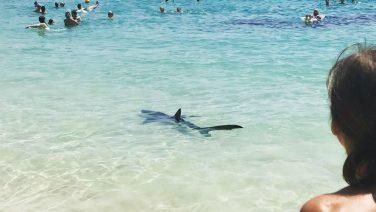 2,5 meter lange haai jaagt badgasten op Mallorca de stuipen op het lijf